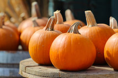 Colorful Pumpkins after Harvest Royalty Free Stock Images