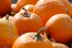 Colorful Pumpkins after Harvest Stock Image