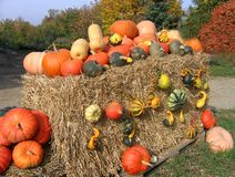 Colorful pumpkins on hay bale Stock Image