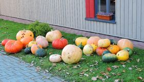 Colorful pumpkins near path, Lithuania Stock Photos