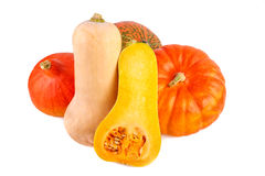 Colorful Pumpkins over White. Pumpkins different squash isolated on white Royalty Free Stock Photos