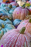 Colorful Pumpkins For sale. At a local Virginia Farm Stock Image