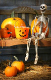 Colorful pumpkins and skeleton on bench Stock Photo