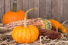 Colorful Pumpkins, Squash and Corn Stock Image