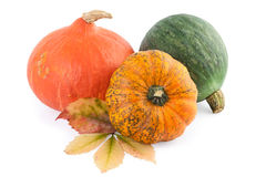 Colorful Pumpkins Squash Stock Image