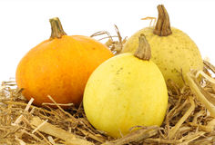 Colorful pumpkins on straw Royalty Free Stock Photo