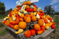 Colorful pumpkins on a tractor trailer Royalty Free Stock Image