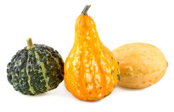 Colorful pumpkins various of gourds ornamental Stock Photo