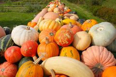 Colorful Pumpkins. Various colorful Pumpkins on a long table in a garden Stock Images