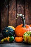 Colorful pumpkins on wooden background Royalty Free Stock Images