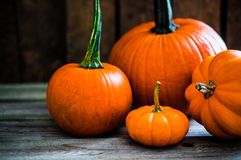 Colorful pumpkins on wooden background Stock Photo