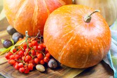 Colorful pumpkins on a wooden table with rowan berries and chestnuts. Stock Image