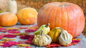 Colorful pumpkins on wooden table Royalty Free Stock Photos