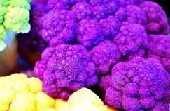 Colorful purple, green and yellow cauliflower Royalty Free Stock Images