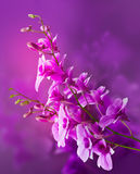Colorful purple orchids, flower vibrant concept Royalty Free Stock Image