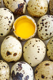 Colorful quail eggs. Royalty Free Stock Images