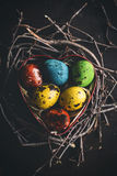 Colorful quail eggs Royalty Free Stock Photography
