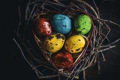 Colorful quail eggs Stock Image