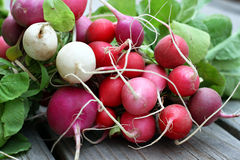 Free Colorful Radishes Stock Photography - 45459722