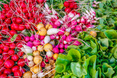 Colorful Radishes and Lettuce. Red, violet, pink, white and yellow radishes and fresh green lettuce on a stand at a farmers market in Burlington, Vermont Royalty Free Stock Images