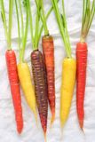 Rainbow carrots on white background. Colorful rainbow carrots in vertical format drying on paper towels and shot in natural light Royalty Free Stock Images