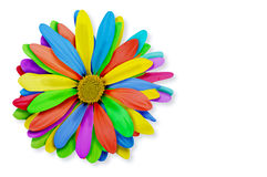 Colorful Rainbow Flower Royalty Free Stock Photography