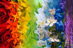 Colorful rainbow of flowers Royalty Free Stock Image