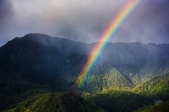 Colorful of rainbow in the forest during rain fall.  Royalty Free Stock Photo