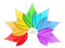 Colorful Rainbow Gradient with Group of Leafs Stock Image