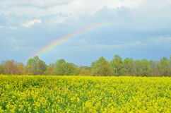Colorful rainbow over yellow canola field Royalty Free Stock Image