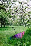 Colorful rainbow-umbrella in the blooming garden. Spring, outdoors. Spring beauty concept. Freshness in blooming garden. Rainbow umbrella on the grass stock photos