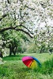 Colorful rainbow-umbrella in the blooming garden. Spring, outdoors. Spring beauty concept. Freshness in blooming garden. Rainbow umbrella on the grass royalty free stock photo