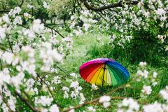 Colorful rainbow-umbrella in the blooming garden. Spring, outdoors. Spring beauty concept. Freshness in blooming garden. Rainbow umbrella on the grass stock images