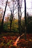 Colorful rainy fall day in the woods, in Upstate NY. Orange,yellow,red tones create this magical feeling of being in the forest when all the colors are stock photography