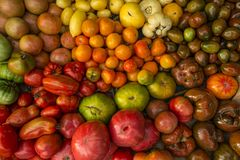Different colorful tomatoes collected from a farmer`s market Royalty Free Stock Image