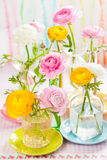 Colorful ranunculus Royalty Free Stock Images