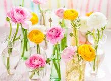 Colorful ranunculus Stock Photos