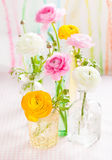 Colorful ranunculus Stock Photography