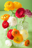 Colorful ranunculus flowers in vase over green background Royalty Free Stock Photos