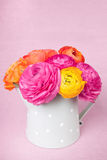 Colorful ranunculus flowers in watering cam Royalty Free Stock Photography