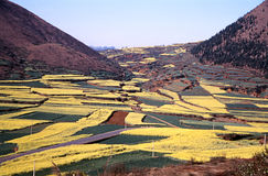 Colorful rape fields Royalty Free Stock Images