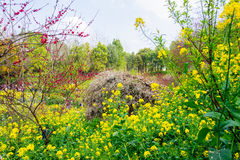 Colorful rape flower field Stock Photography