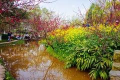 Colorful rape flower field Stock Photo
