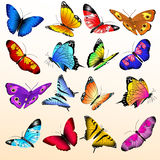 Colorful realistic butterflies big vector set Royalty Free Stock Photo