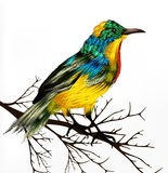 Colorful realistic tropical bird sit at the branch on wh Vector Illustration