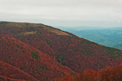 Colorful red autumn landscape in the mountain. Foggy morning in Royalty Free Stock Images