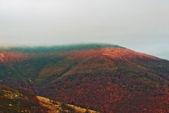 Colorful red autumn landscape in the mountain. Foggy morning mou Stock Images