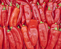 Colorful red bell peppers for sale Stock Image