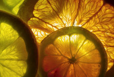 Colorful Red Grapefruit Slices Royalty Free Stock Photo