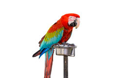 Colorful Red-and-green Macaw bird isolated Royalty Free Stock Photos